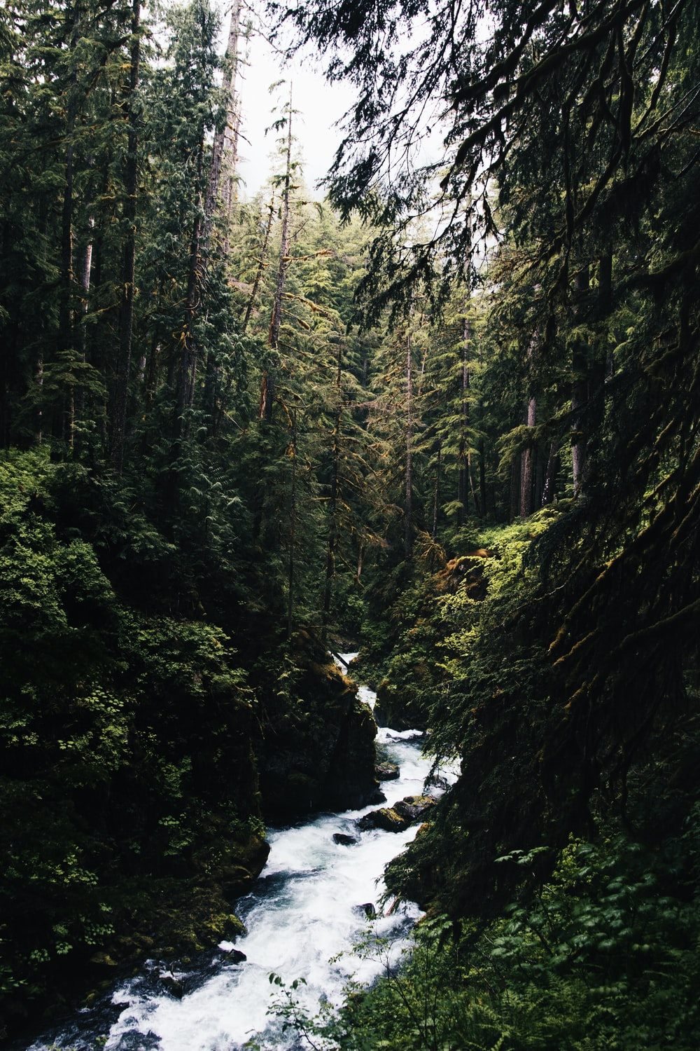 water stream in the middle of forest