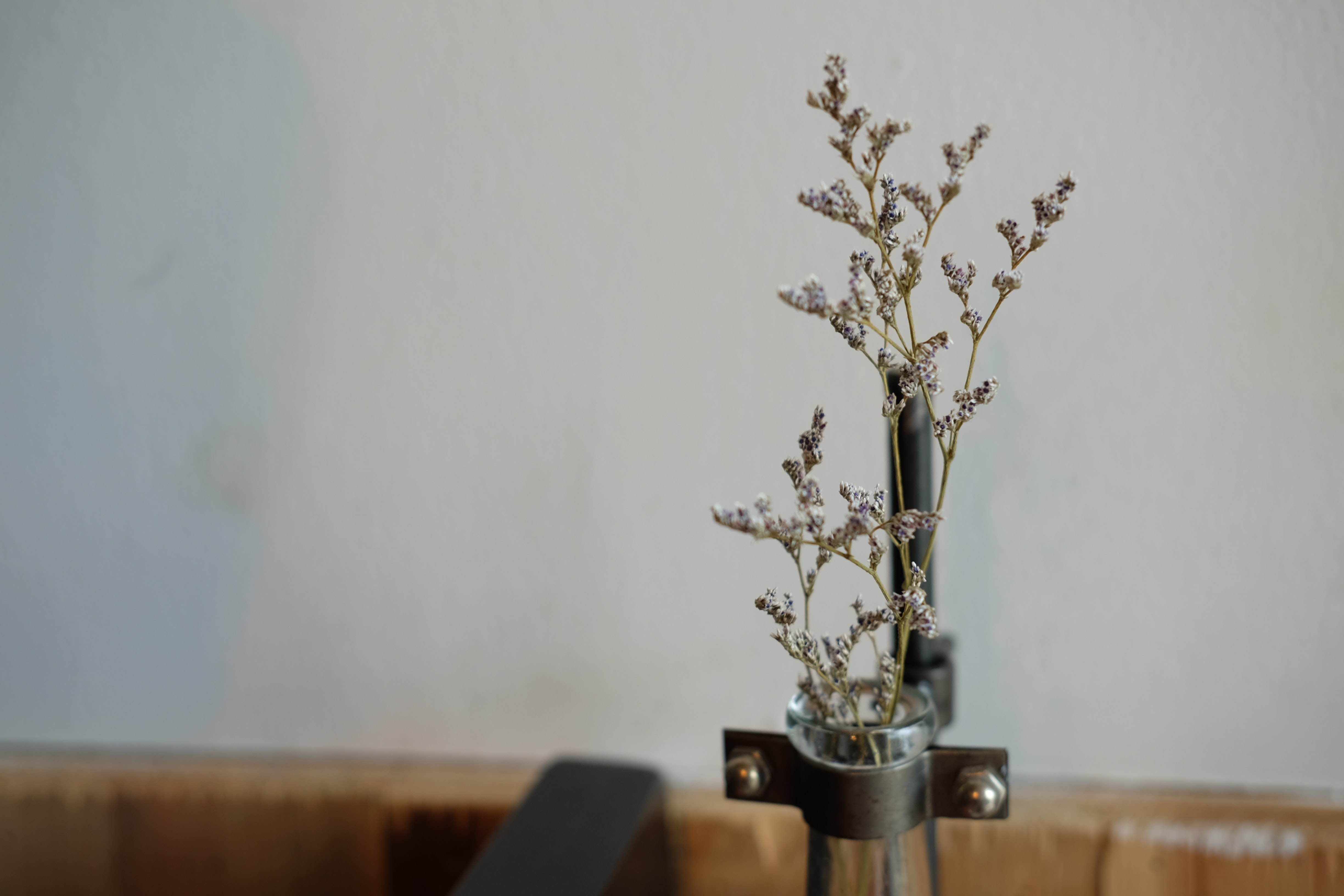 shallow focus photography of white flowers in glass tube