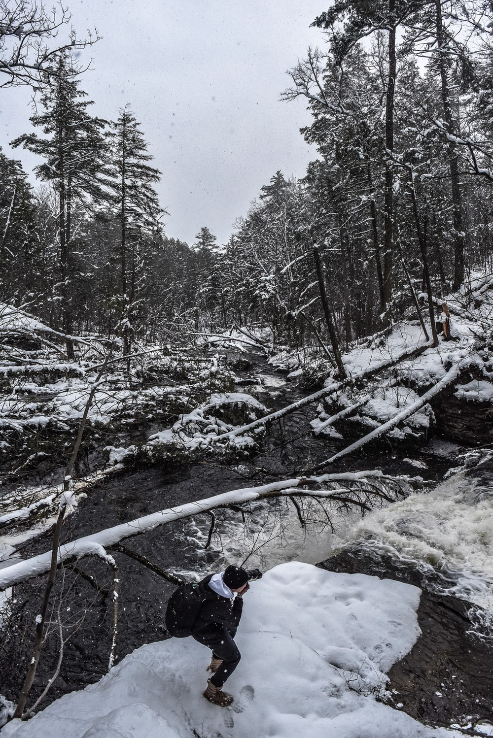 person taking photo of fallen trees on snow