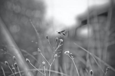 shallow focus photo of wasp uganda zoom background