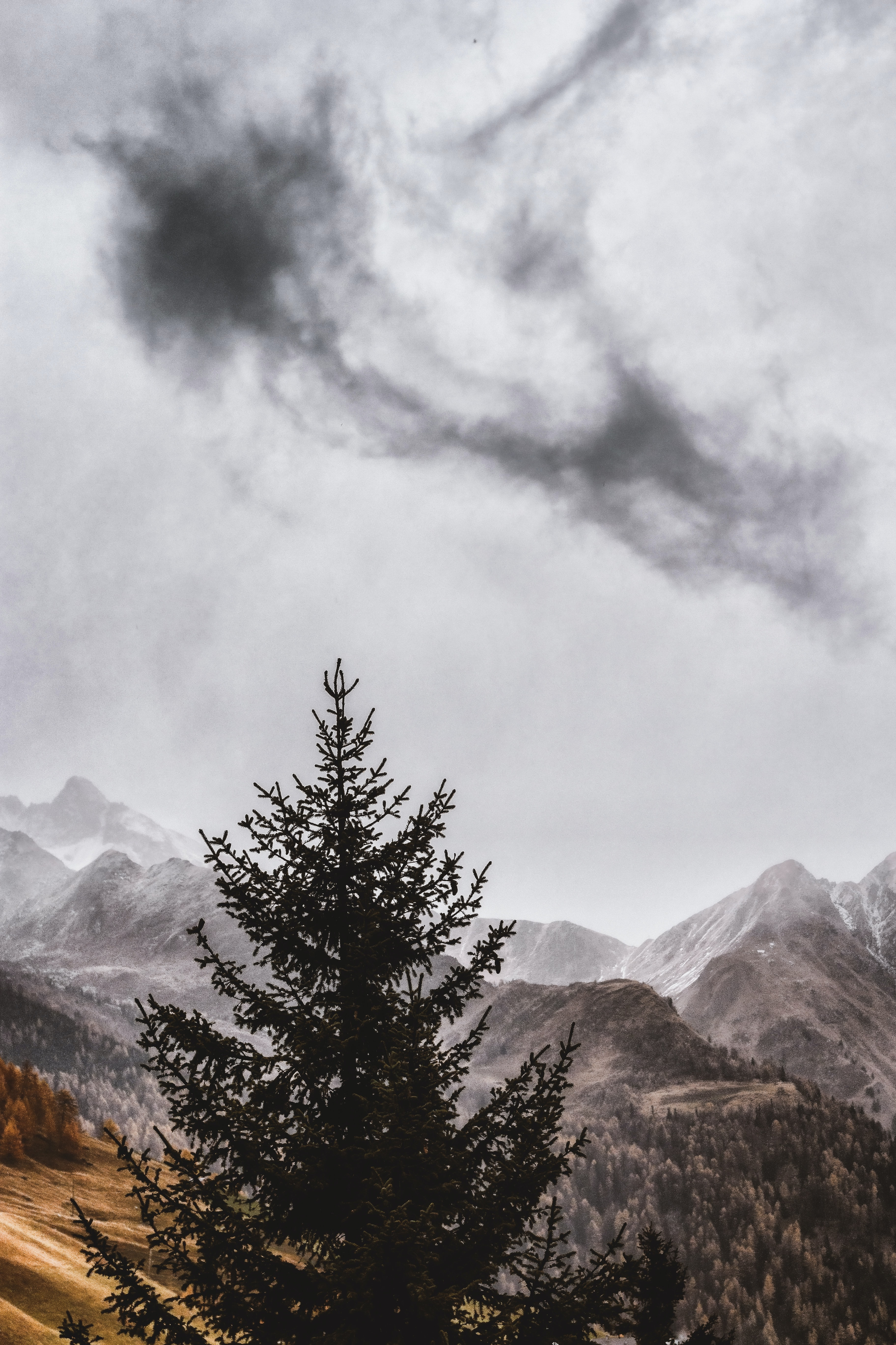 green pine tree during cloudy sky