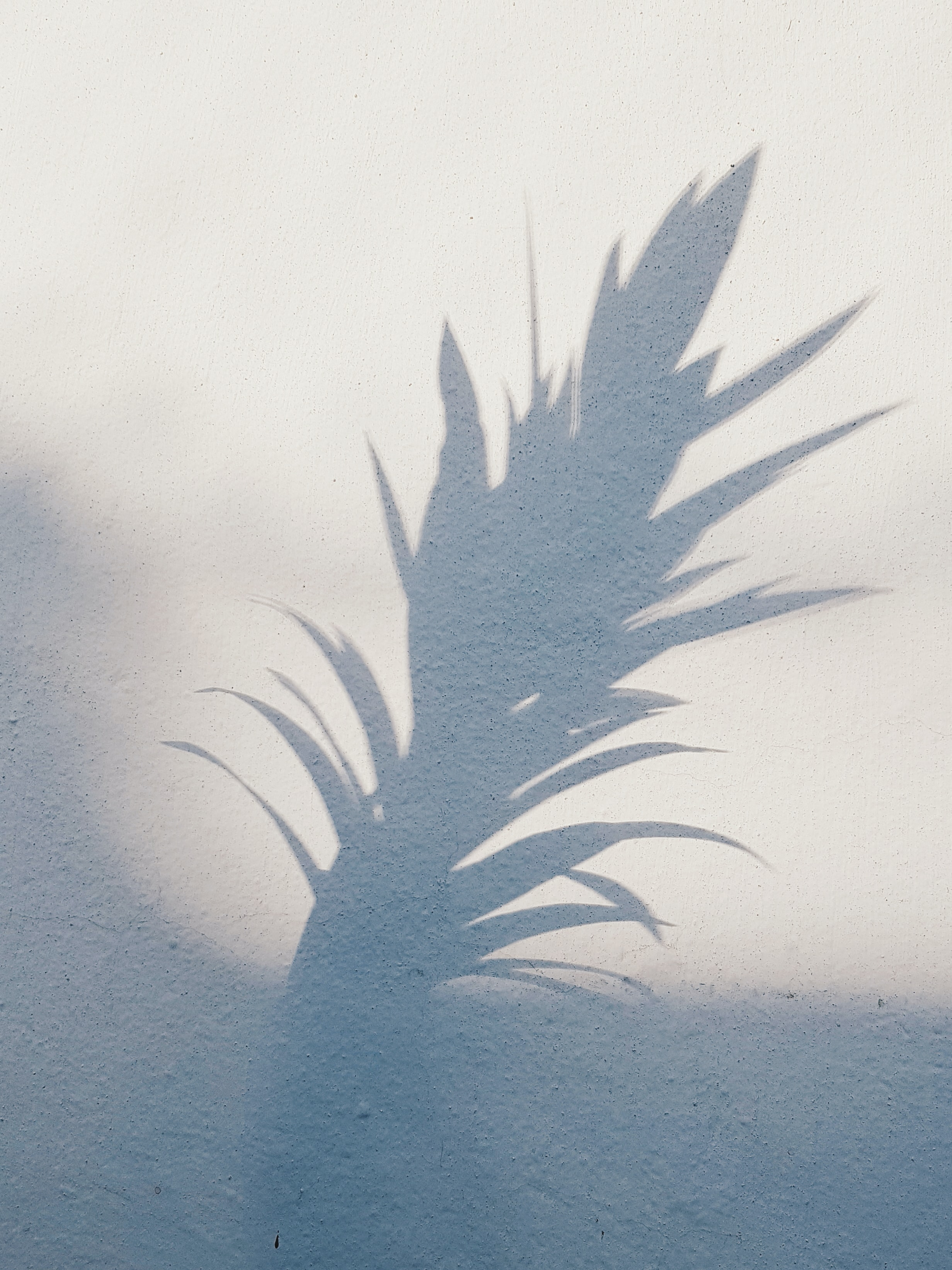 shadow of plant