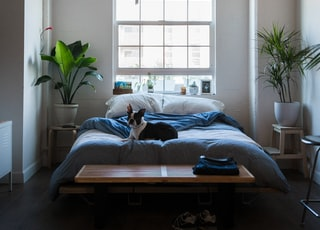 dog lying on bed