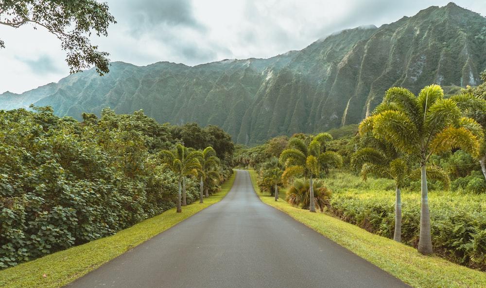 asphalt road beside trees