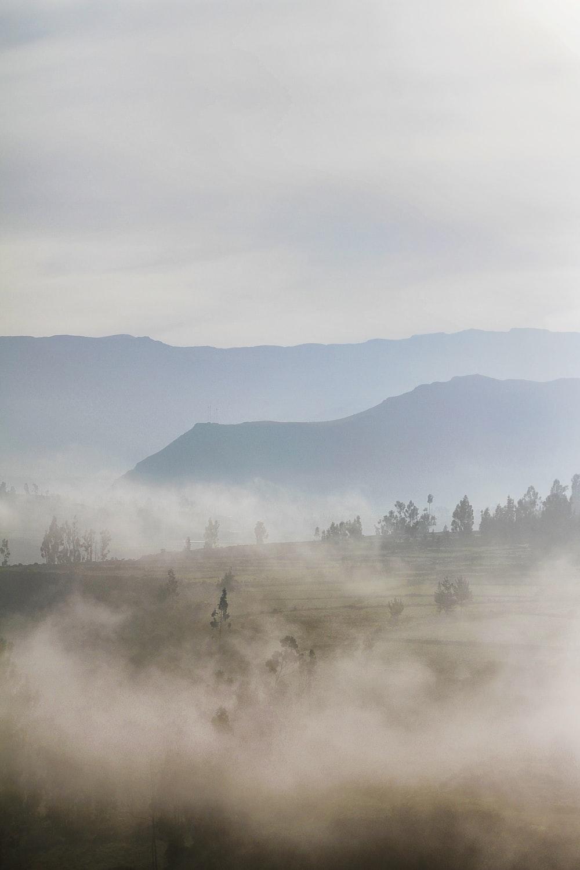 fog on green grass field during daytime