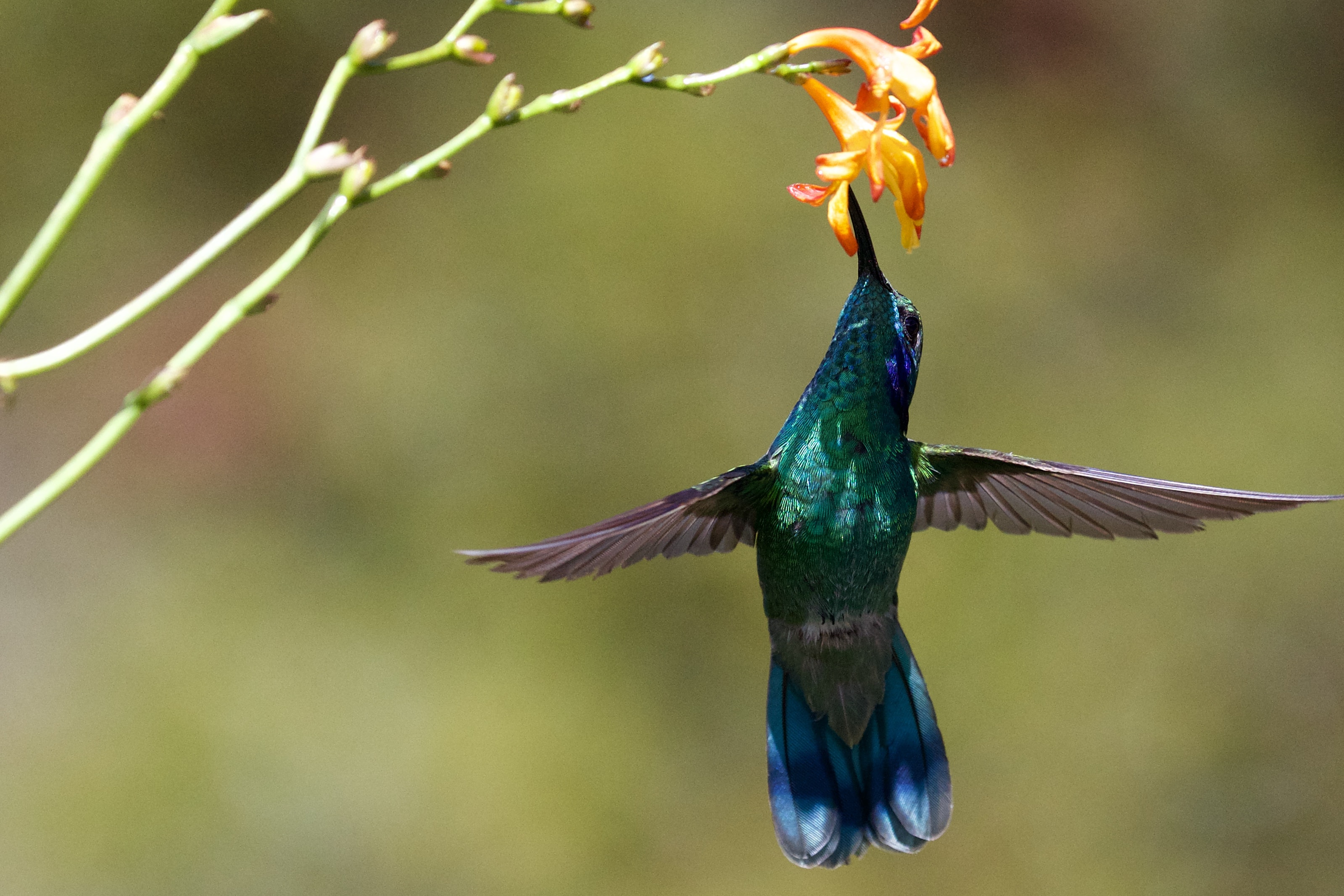 selective focus photo of green and brown humming bird