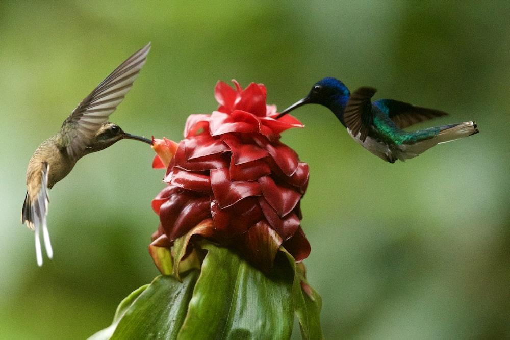 two brown hummingbirds macro photography
