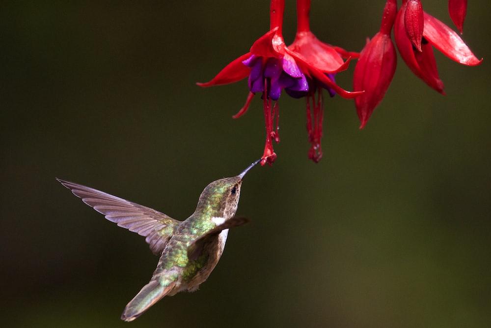 selective focus photo of brown humming bird