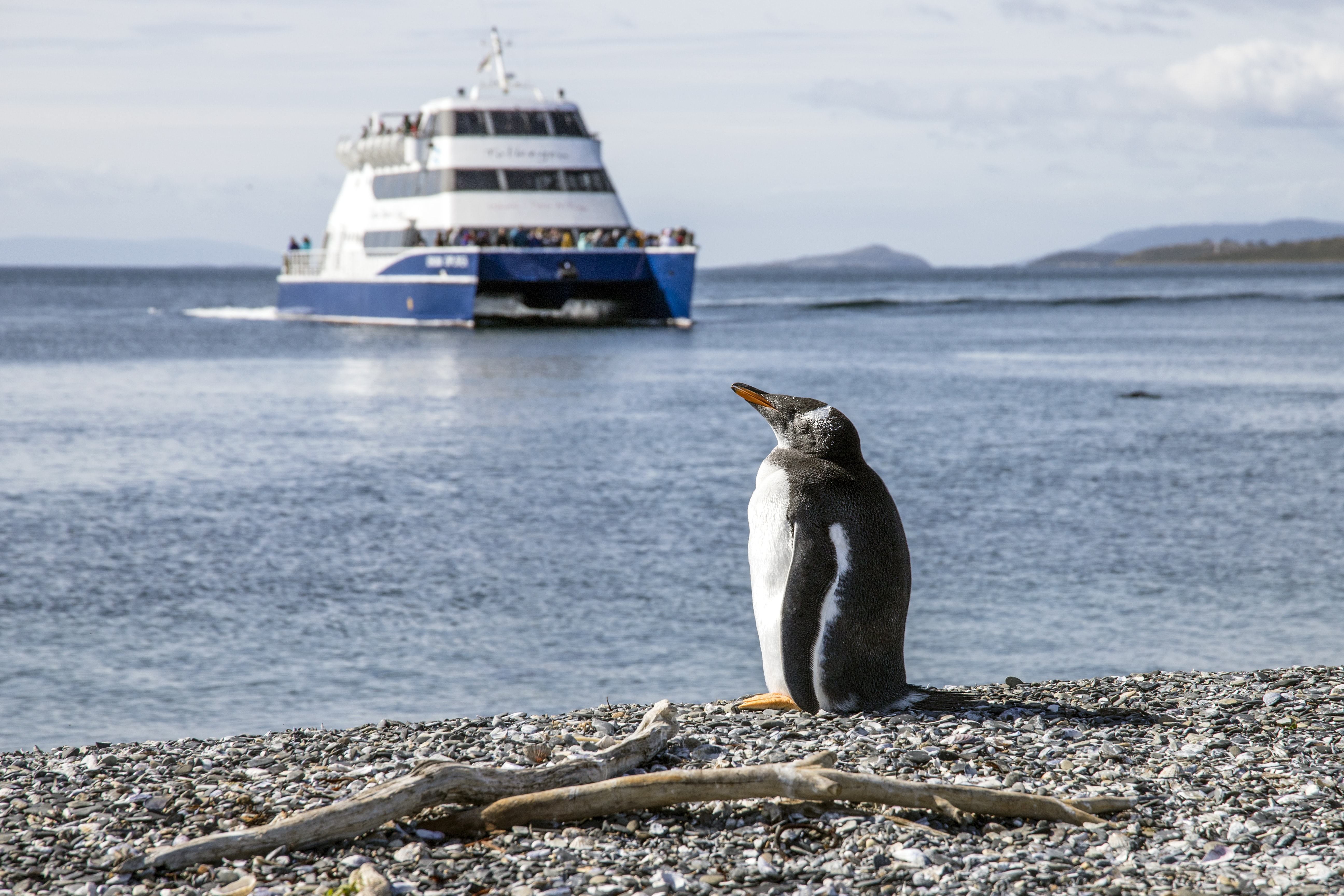 photo of penguin at seashore