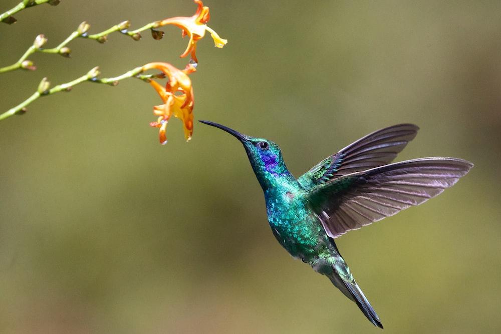 hummingbird near flower