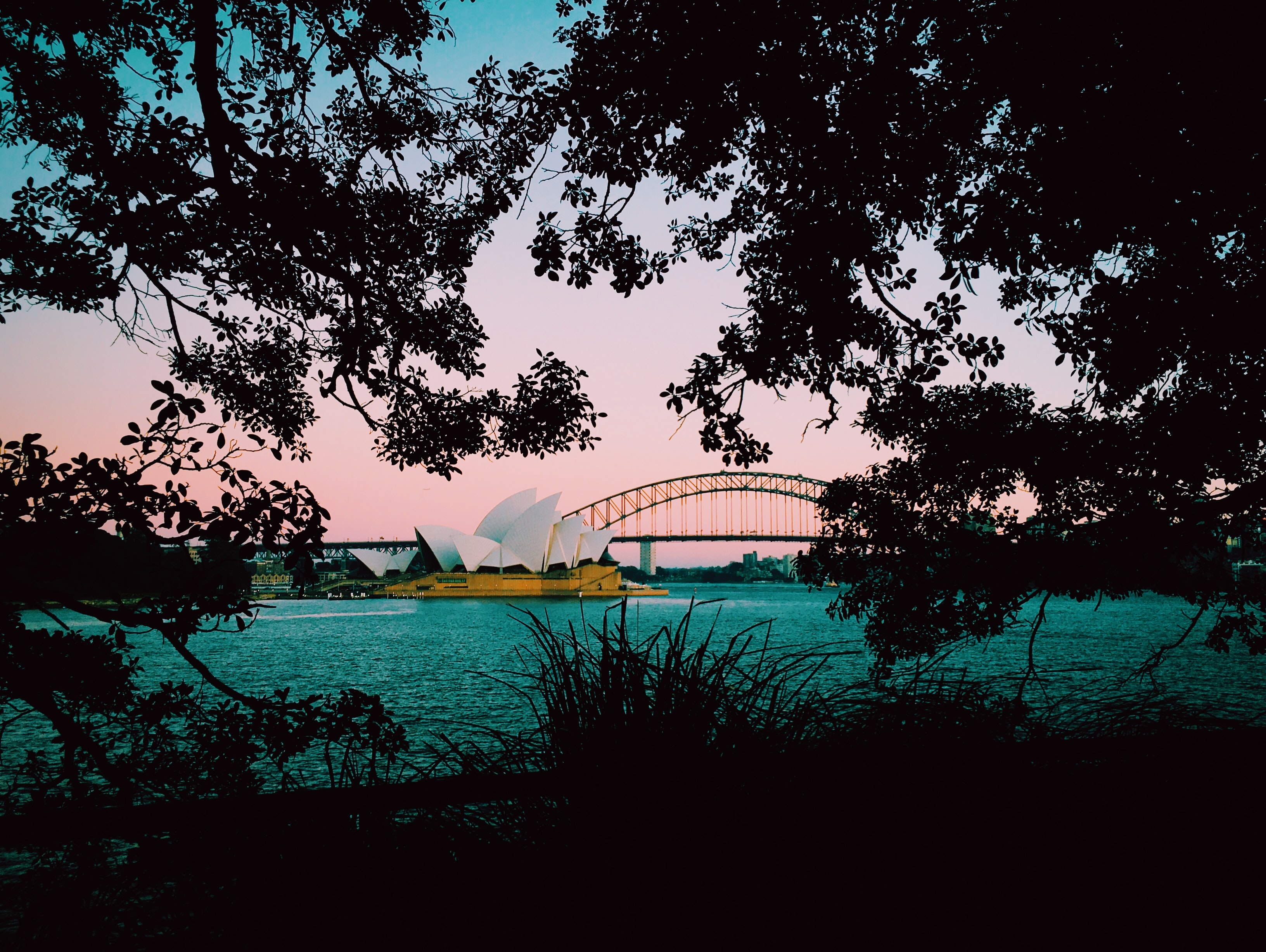 silhouette photo of trees with a view of Sydney Opera House