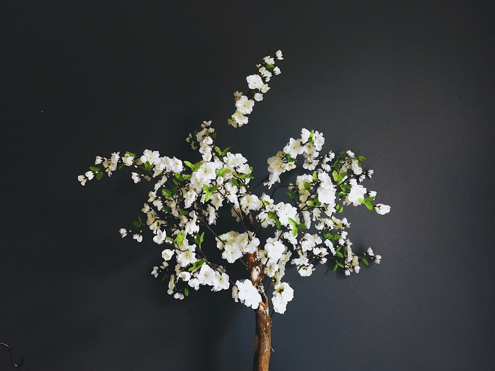 bunch of white petaled flowers