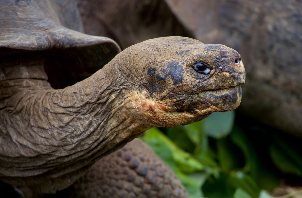 selective focus photography of gray turtle
