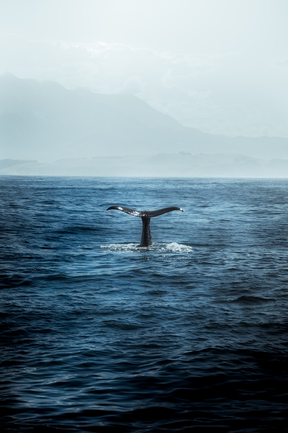 blue whale in body of water