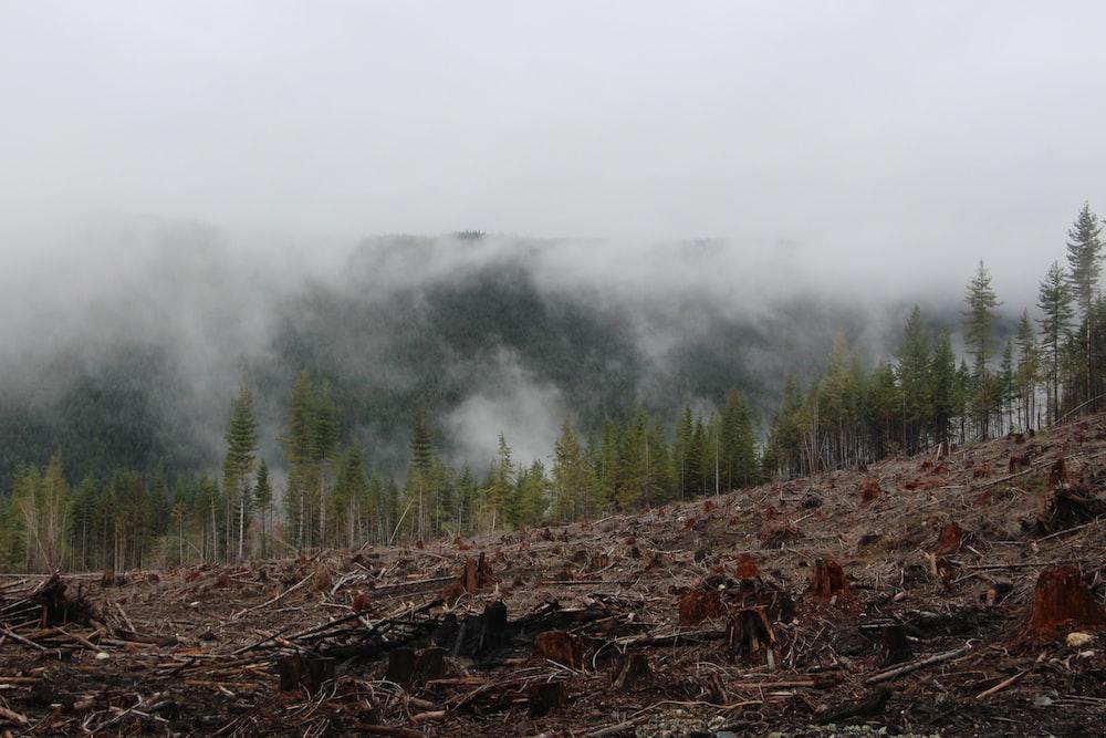 high-rise trees near mountain