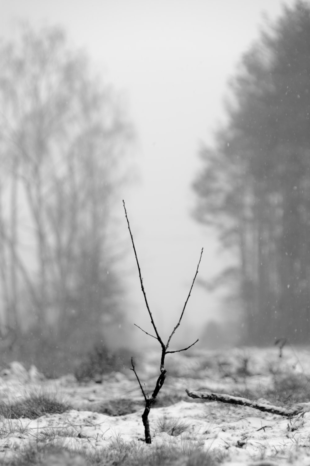 black tree branch on snow-covered field