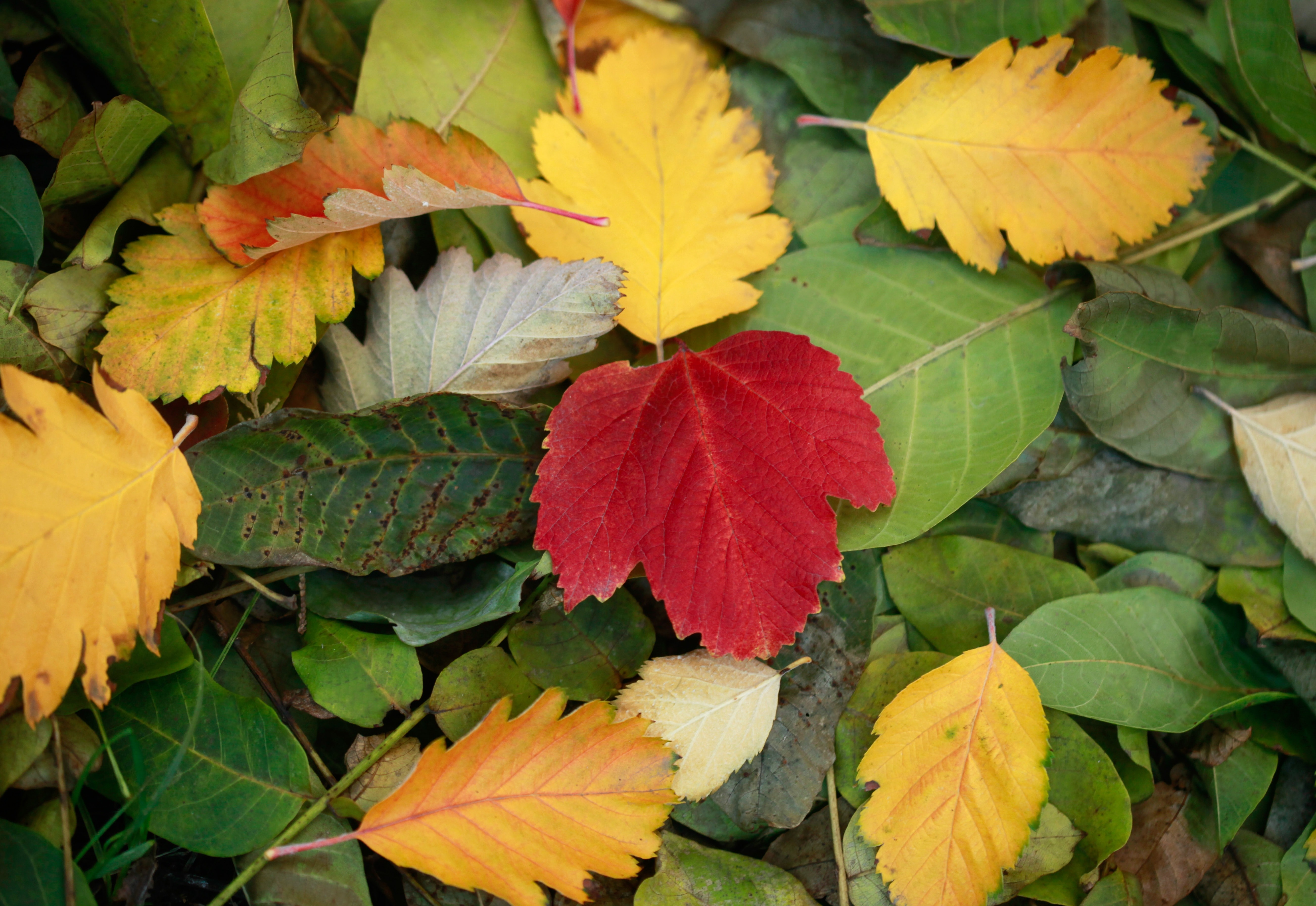 yellow, red, and green fallen leaves