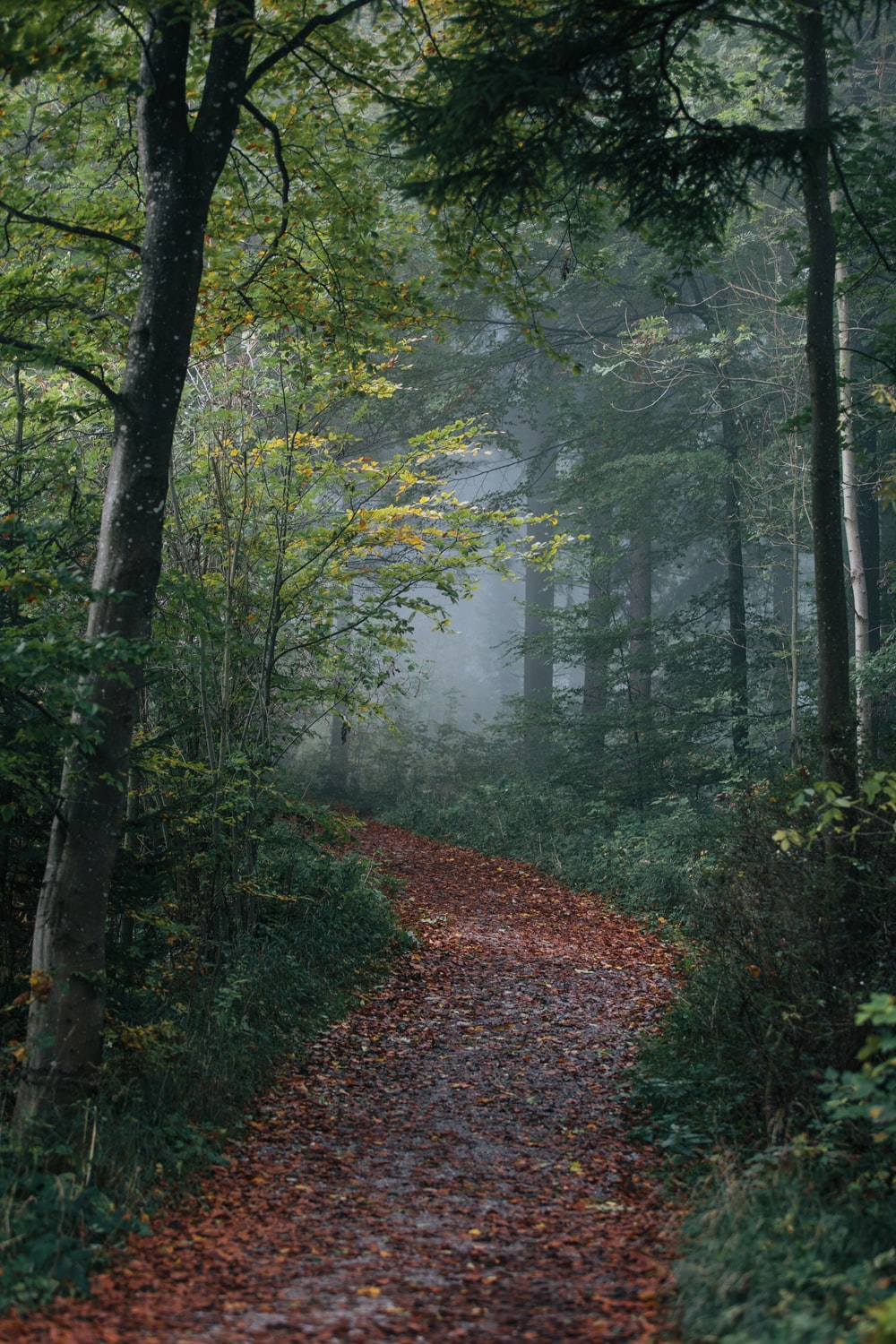 pathway in forest wallpaper