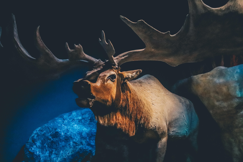 brown moose standing near rock painting