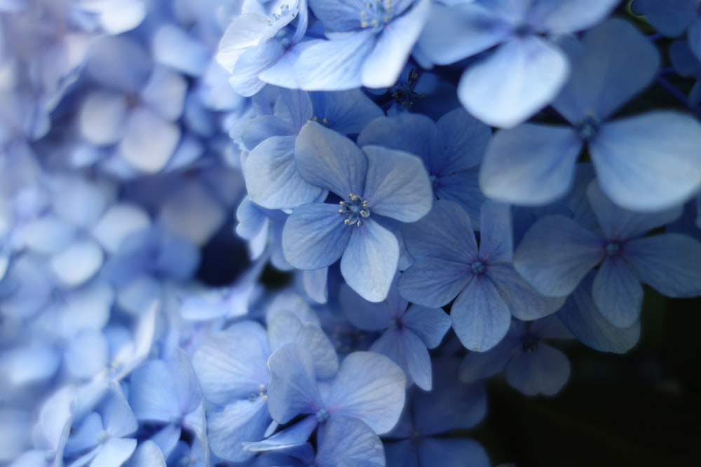 close up photo of blue petaled flower