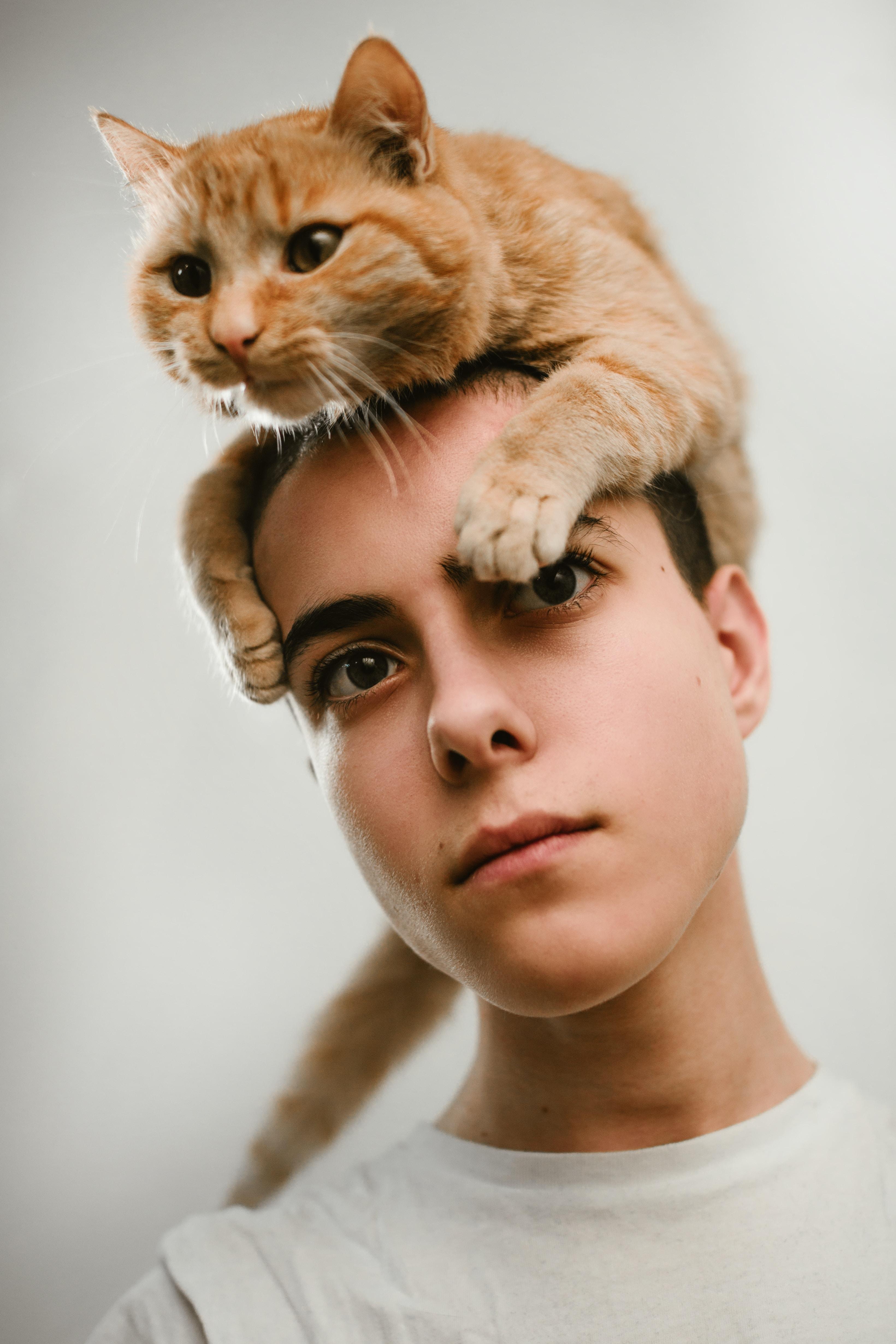 orange cat on head on woman