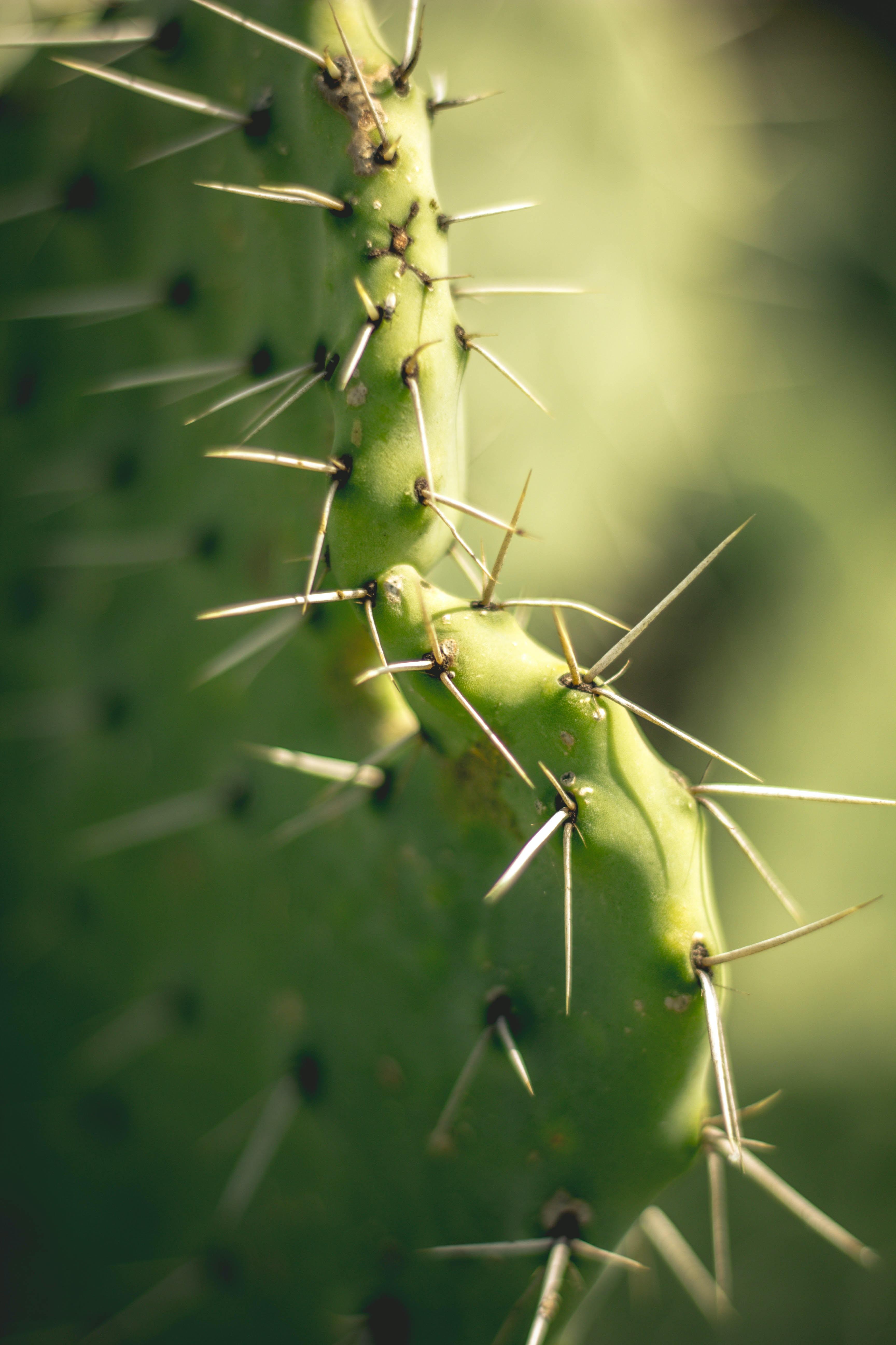 closeup photography of cactus