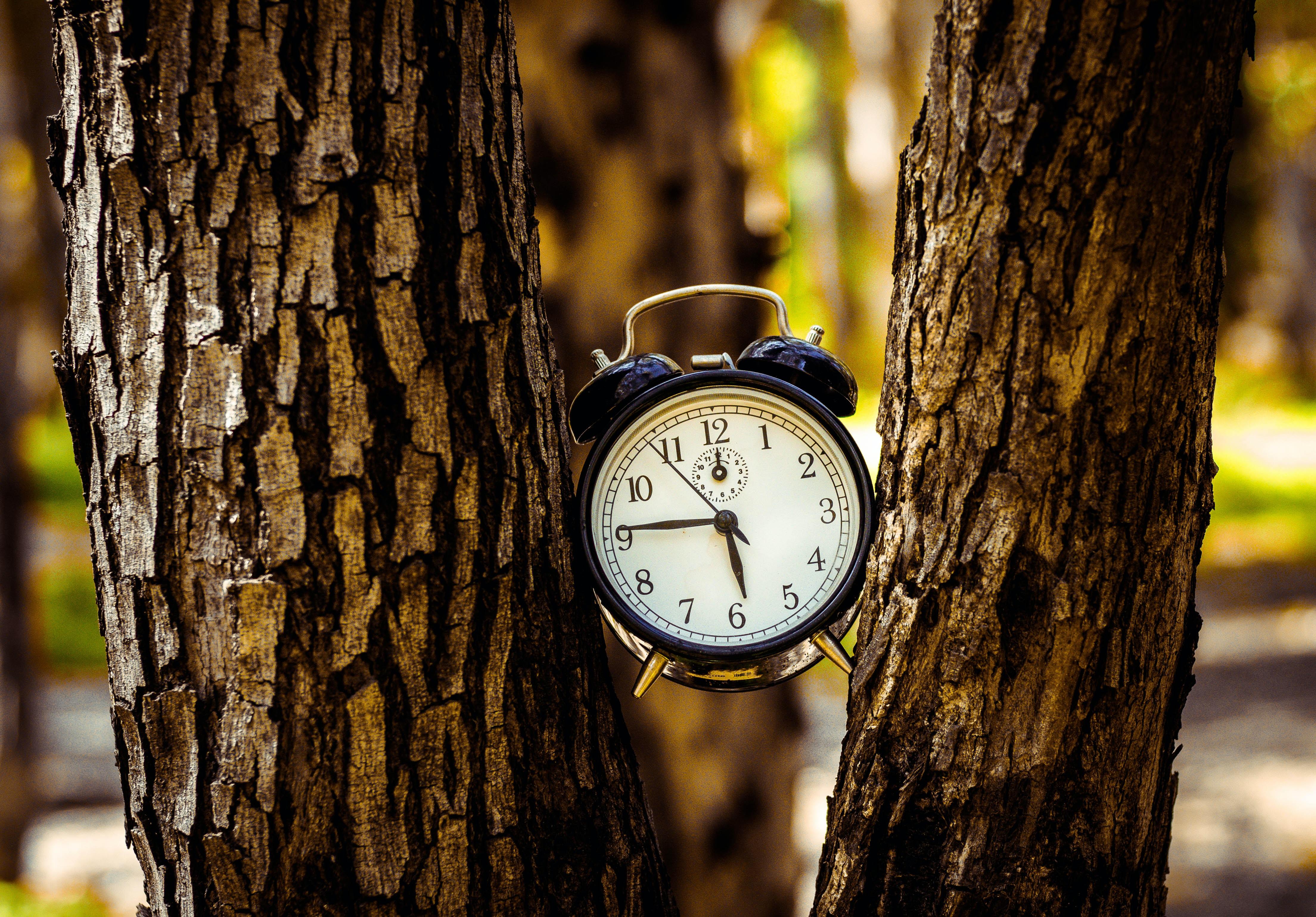 black analog alarm clock between two tree trunks