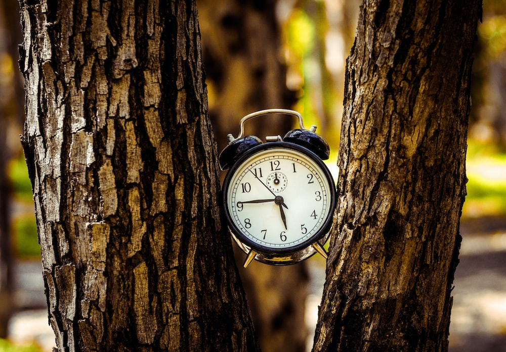 black analog alarm clock between two tree trunks