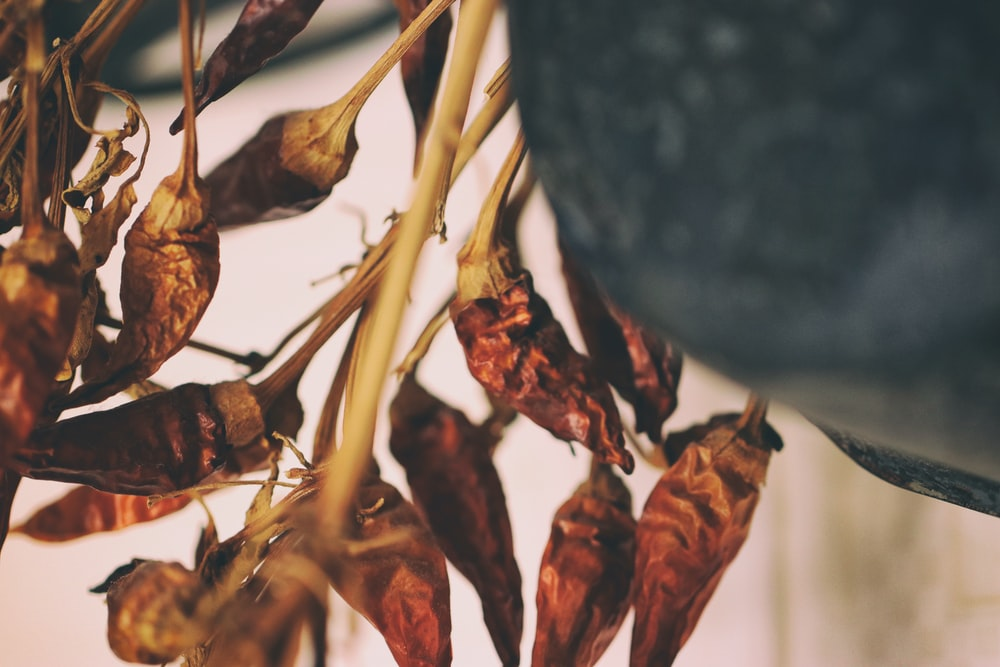 dried jalapenos