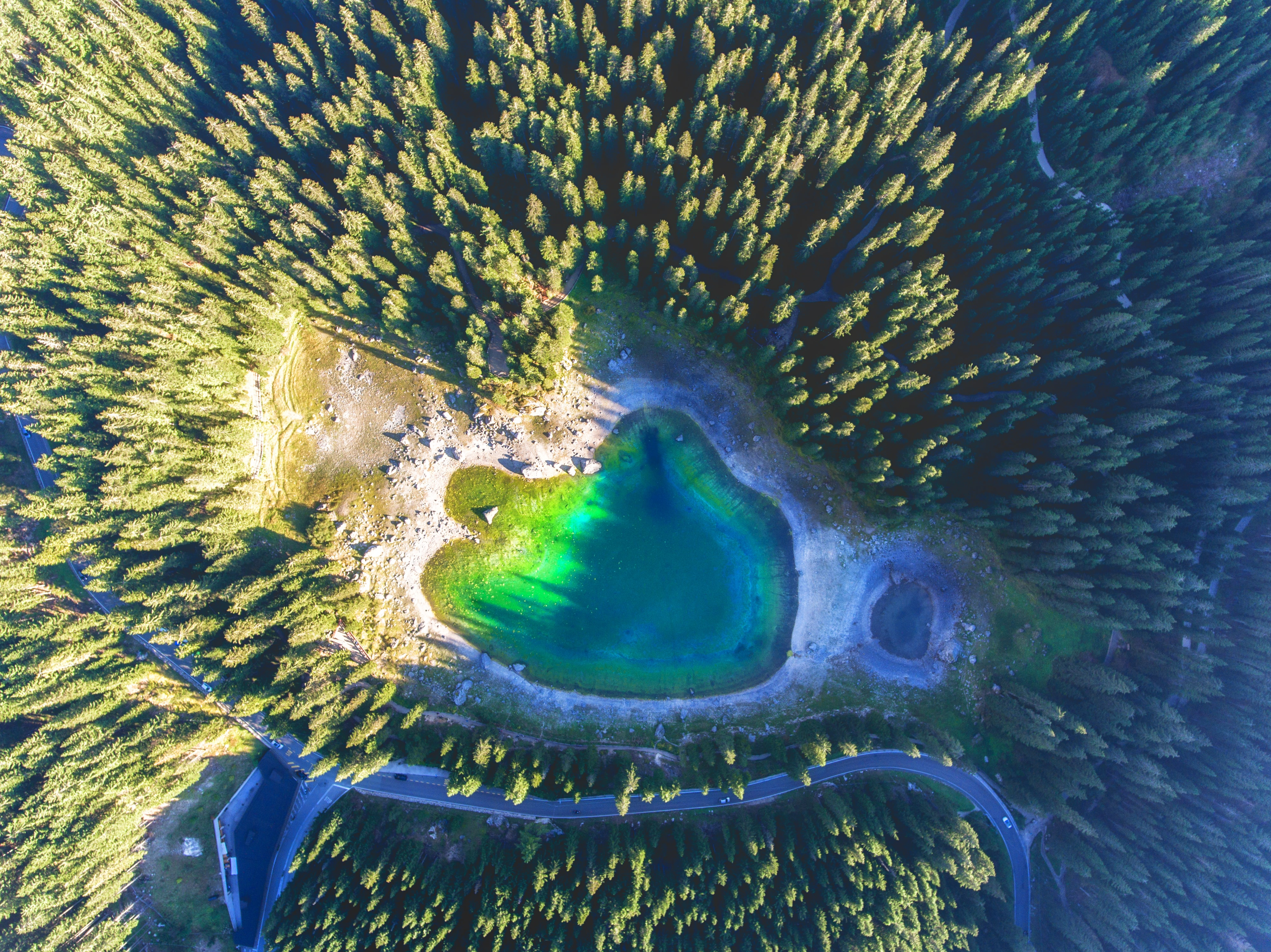 green swamp lake surrounded by trees