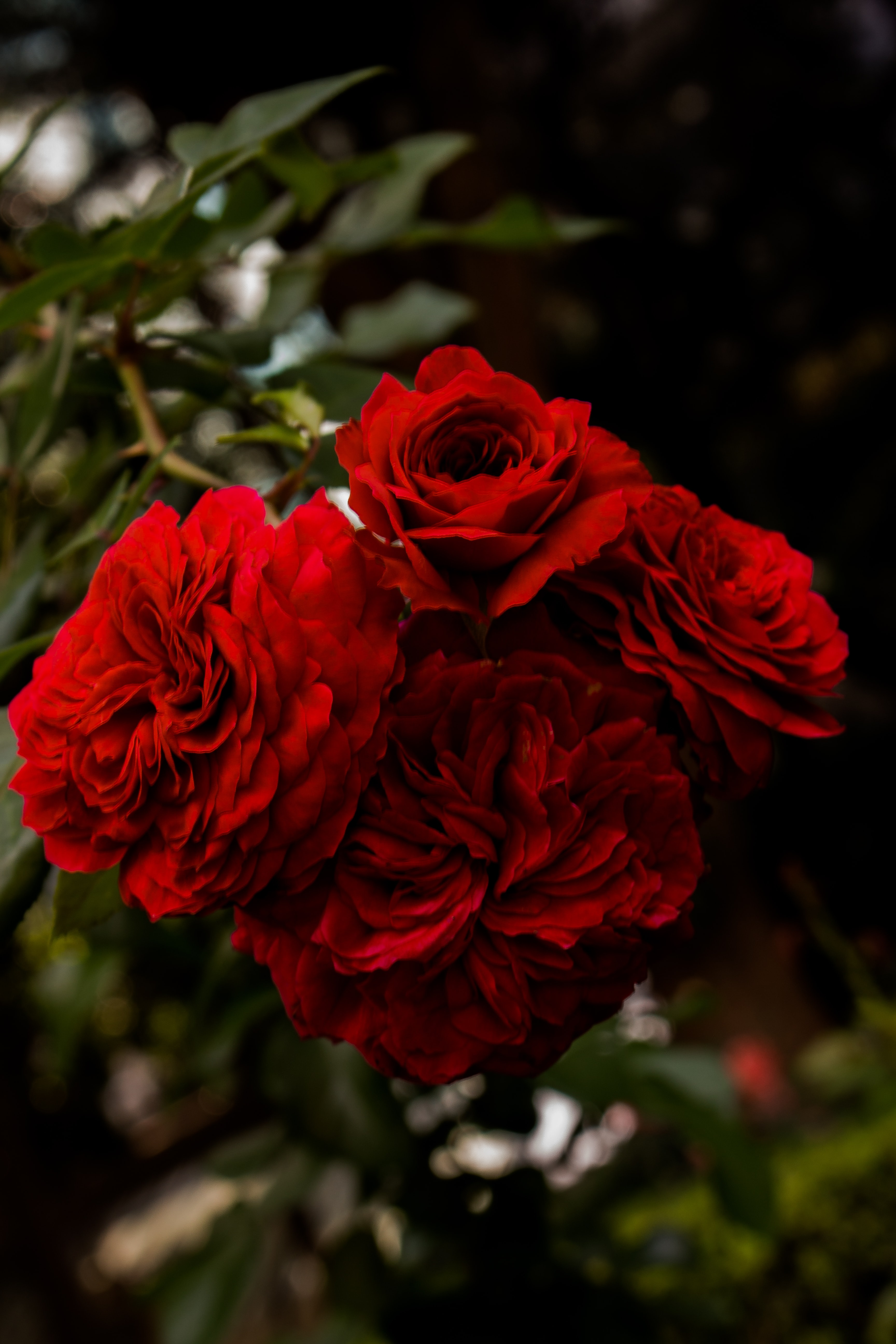 red petaled flowers photography