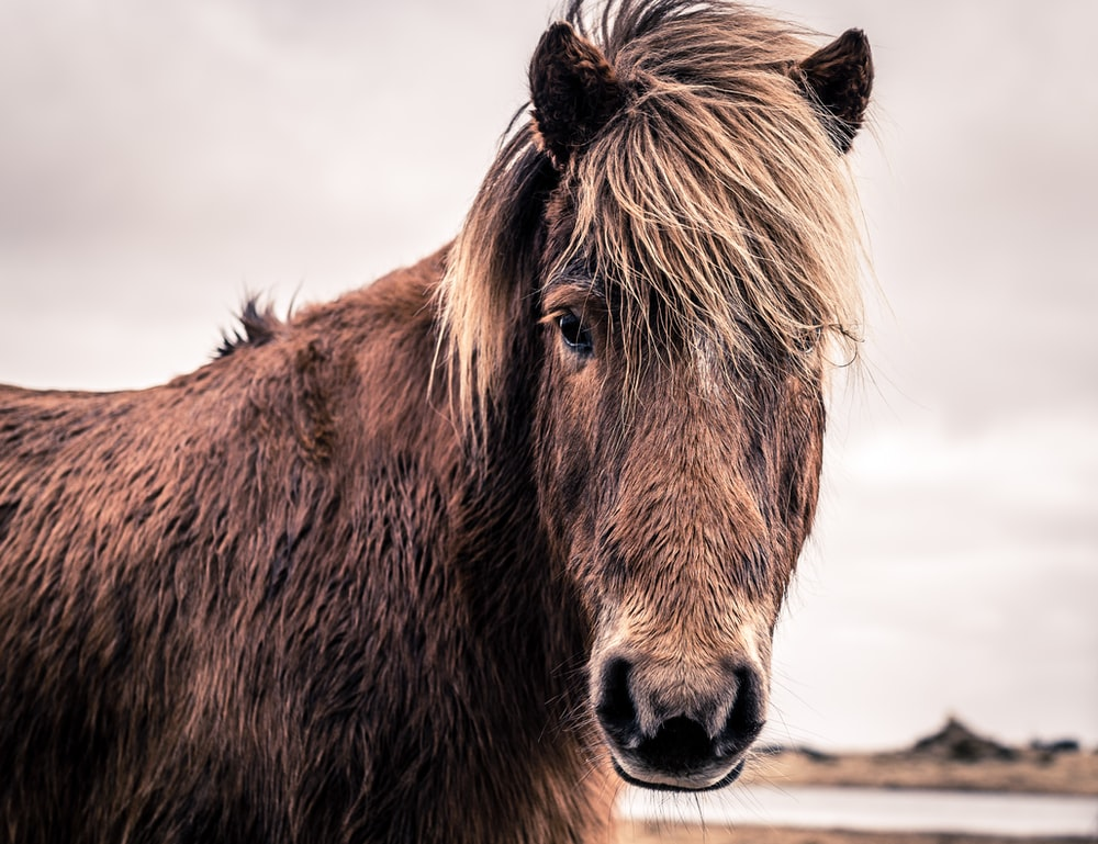 close-up photo of brown horse