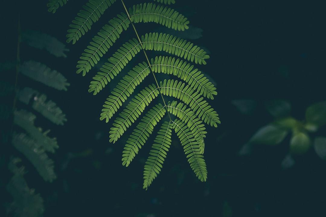 Fern in the woods