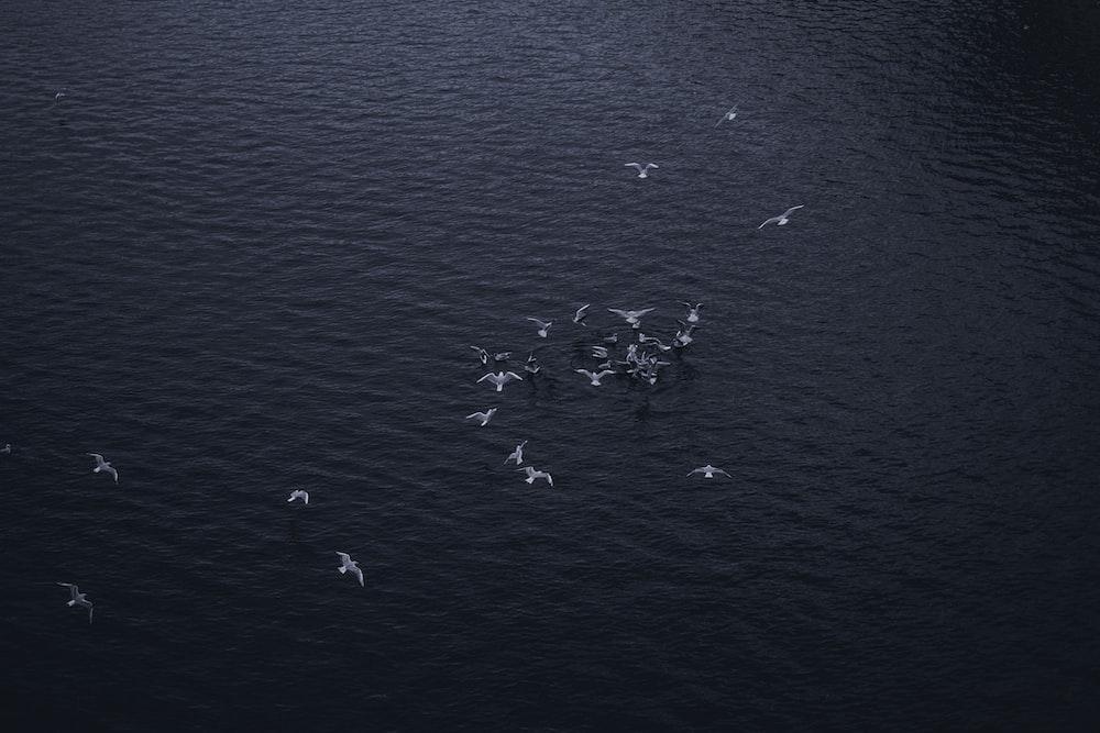 flock of seagull flying on ocean during daytime