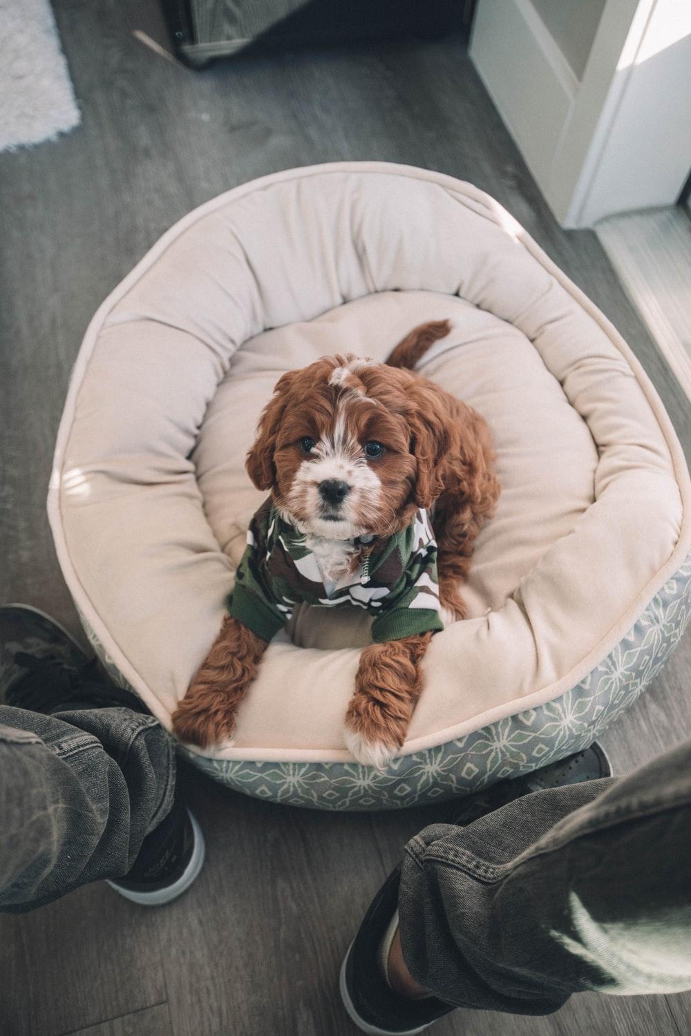 brown dog on pet bed