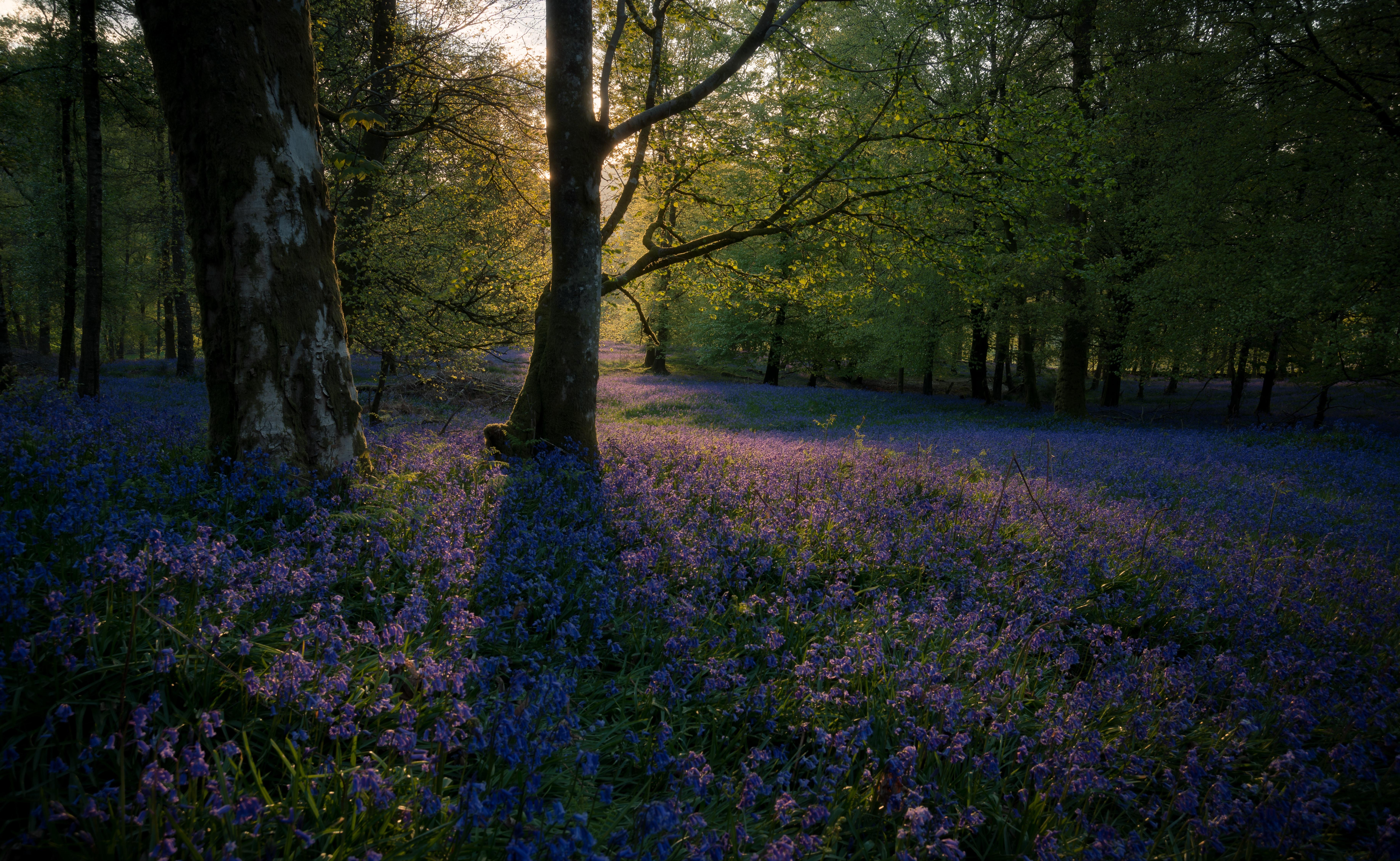 purple flowers in forest