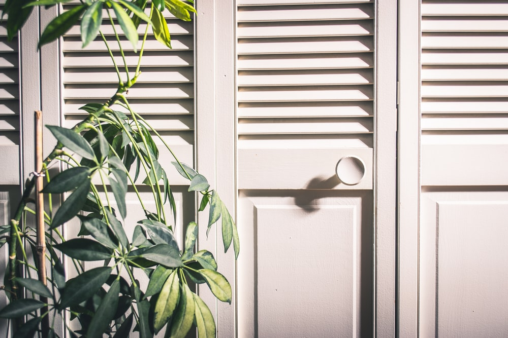 green leafed plant and white wooden louvered door