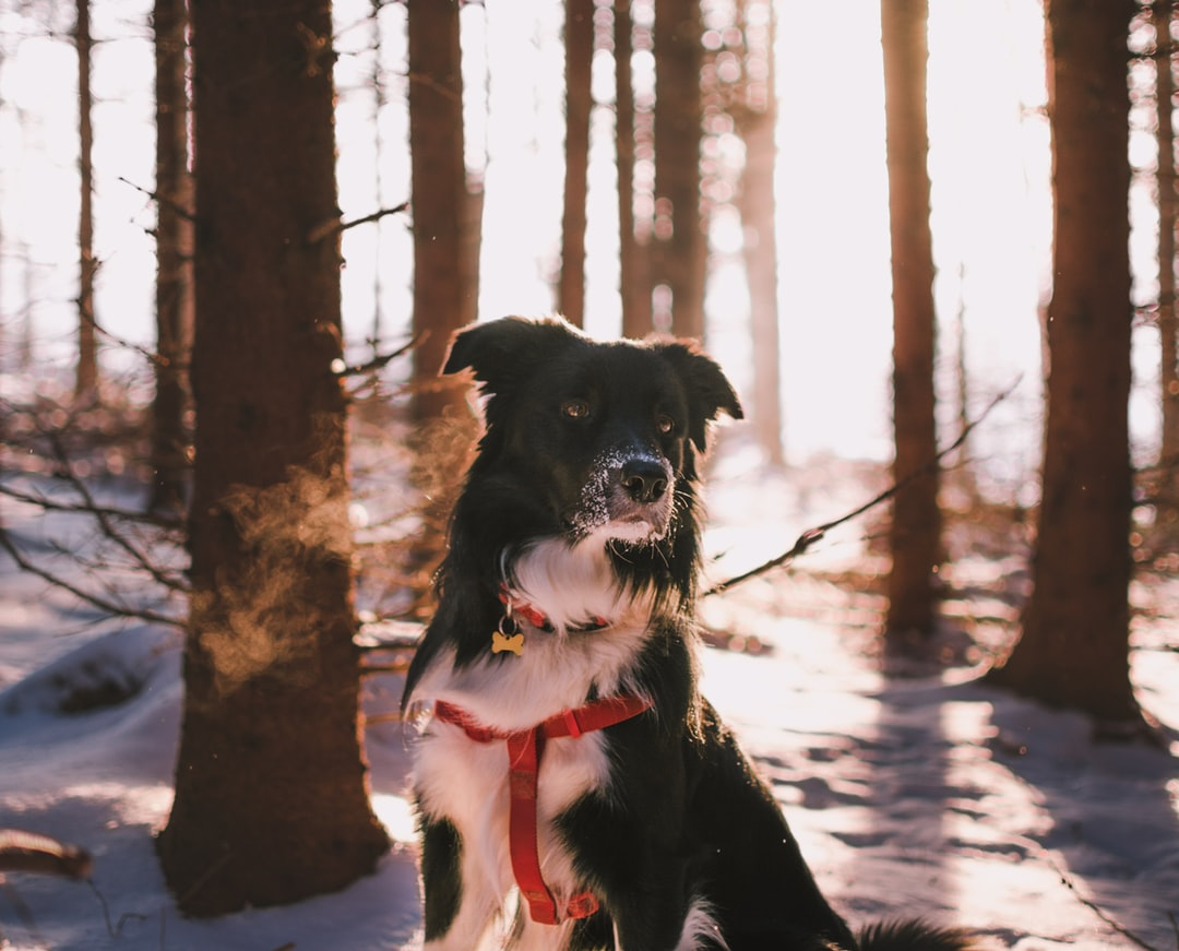 5 Pawsitively Adorable Dog Collar Accessories