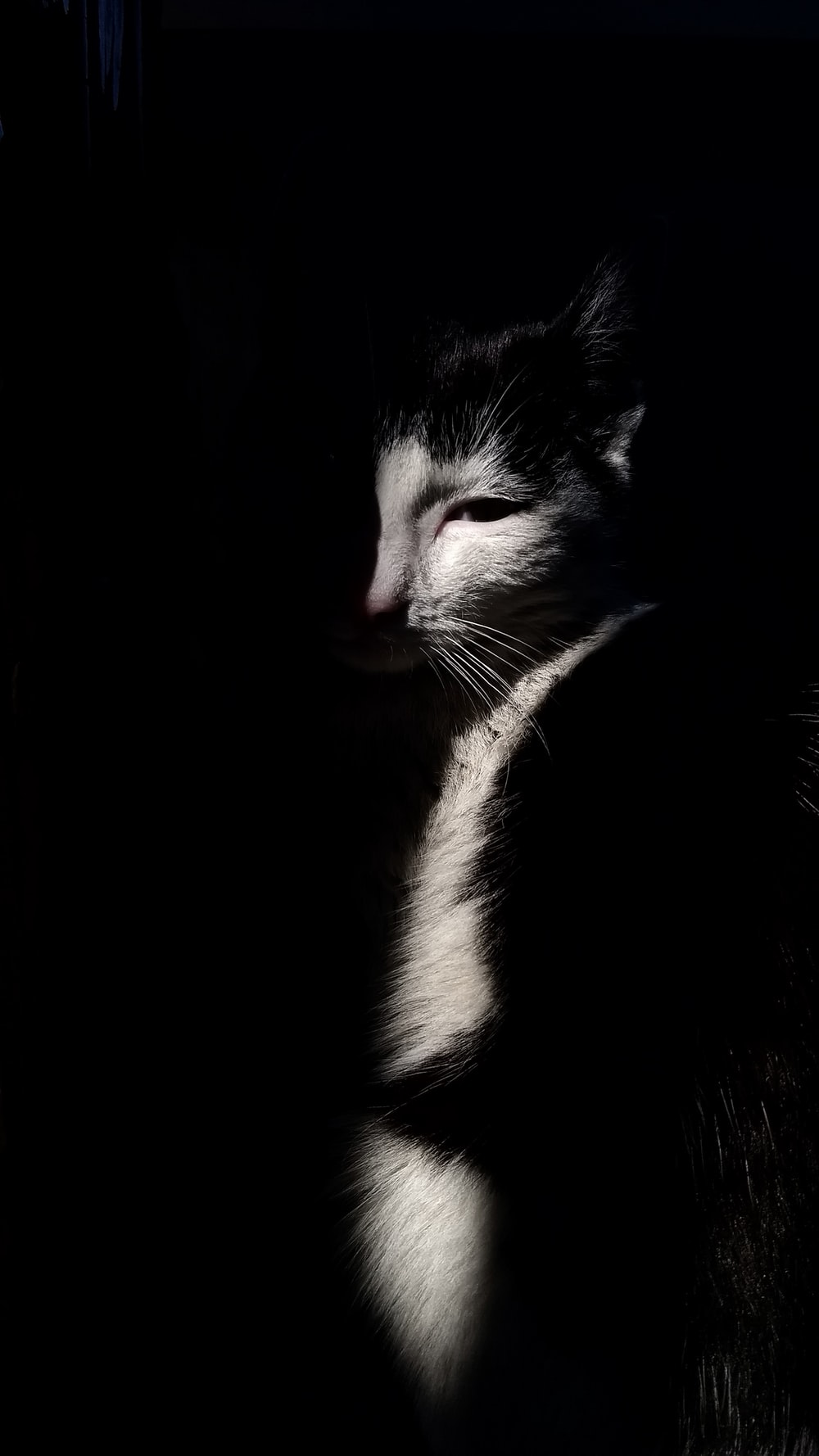 Shallow focus photography of white and black cat