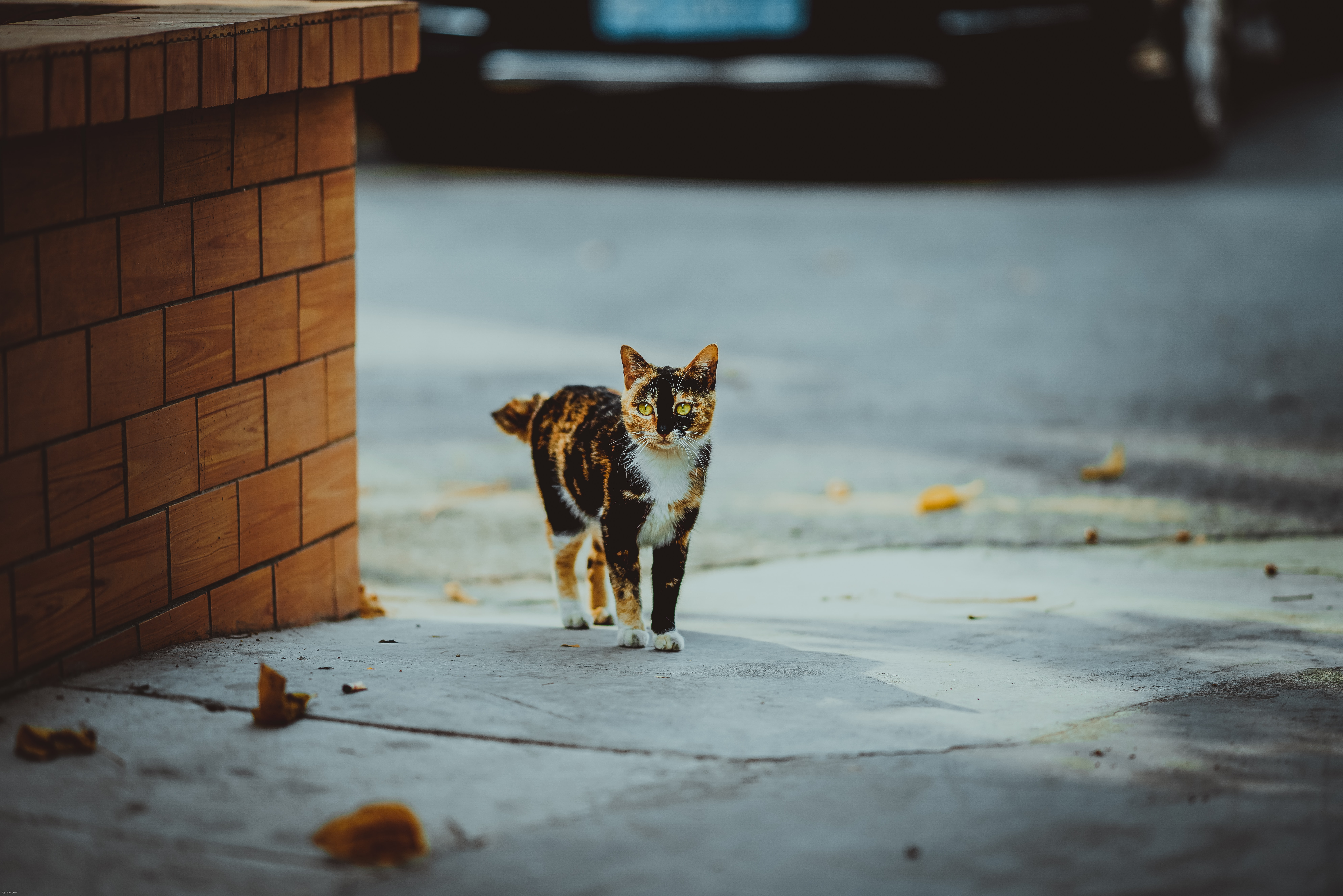 calico cat standing beside concrete brick wall