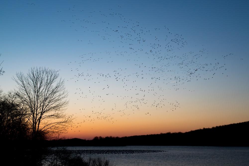 flock of bird flying during sunset