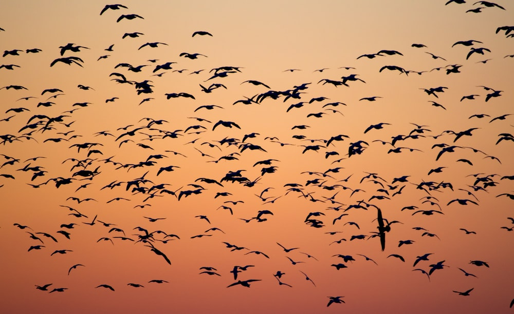 birds during golden hour
