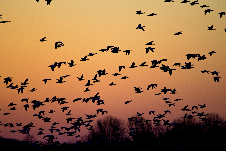 Common Migration Pitfalls to Avoid