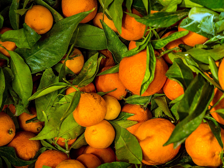 lot of orange fruit