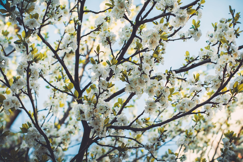 white flowers in shallow focus lens