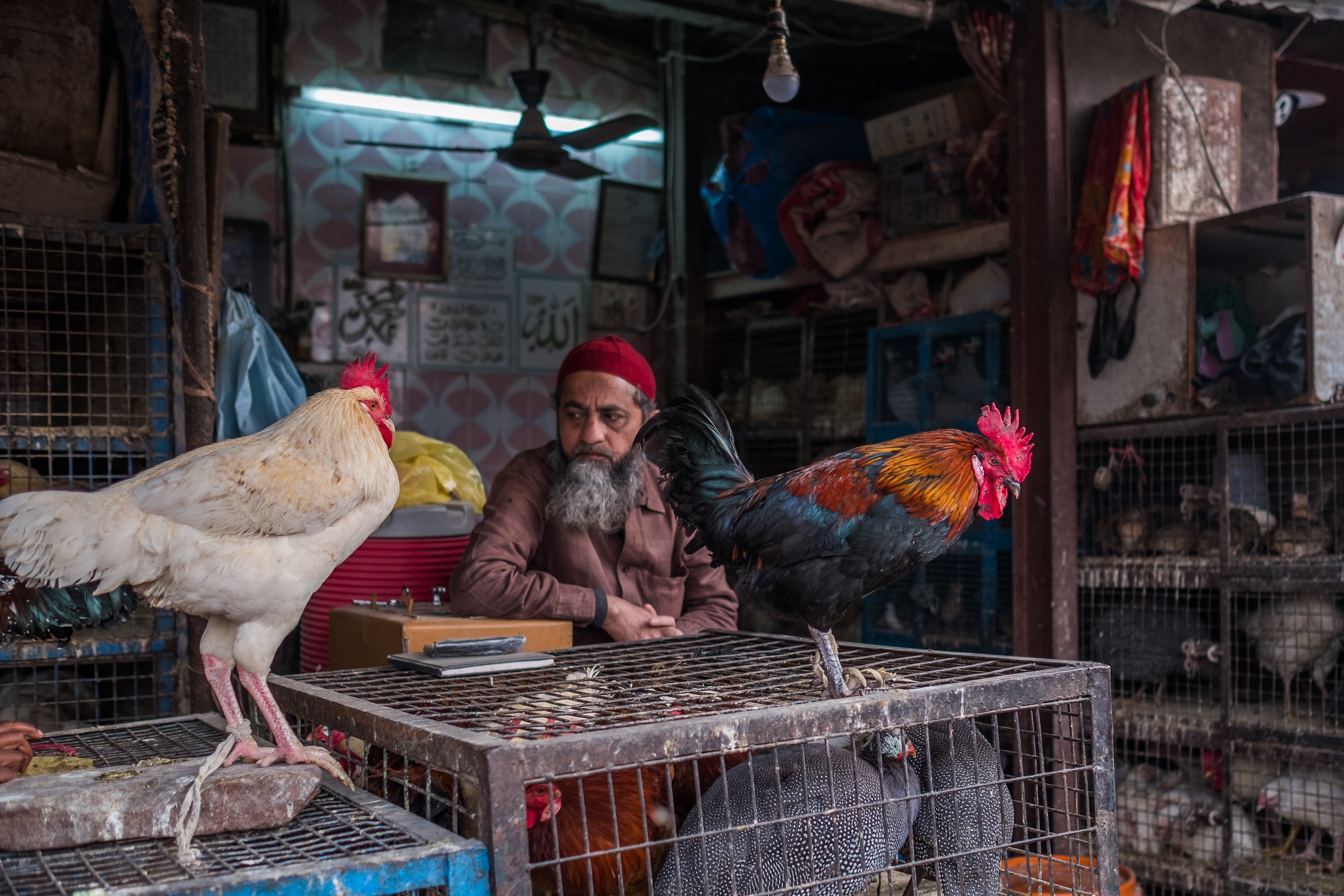 two roosters on pet crates in front of man in red cap during daytime