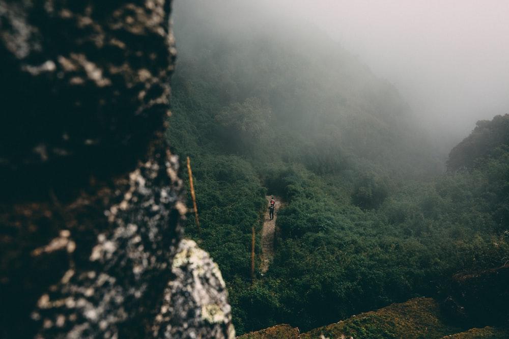 person standing between trees