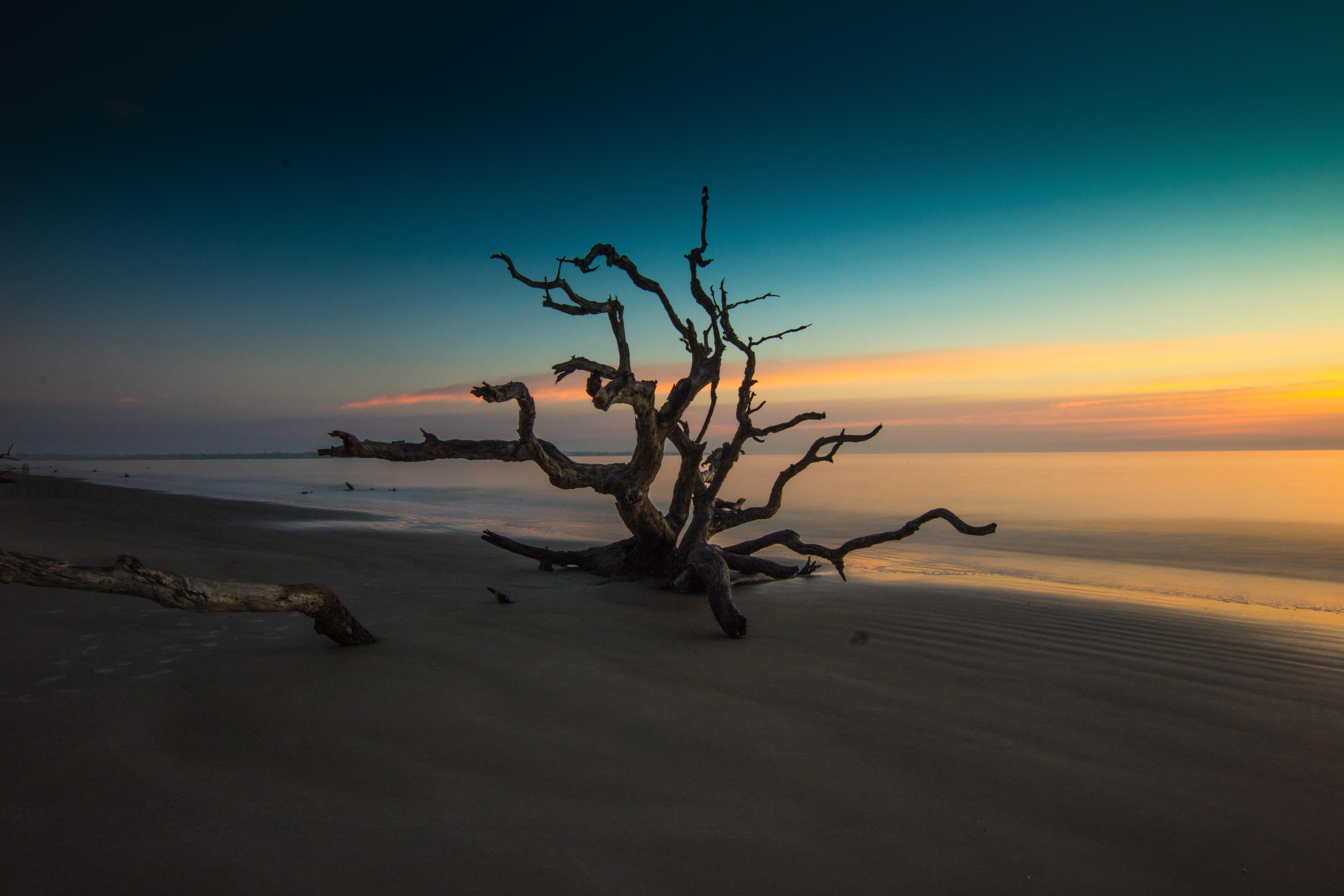 brown bare tree on beach
