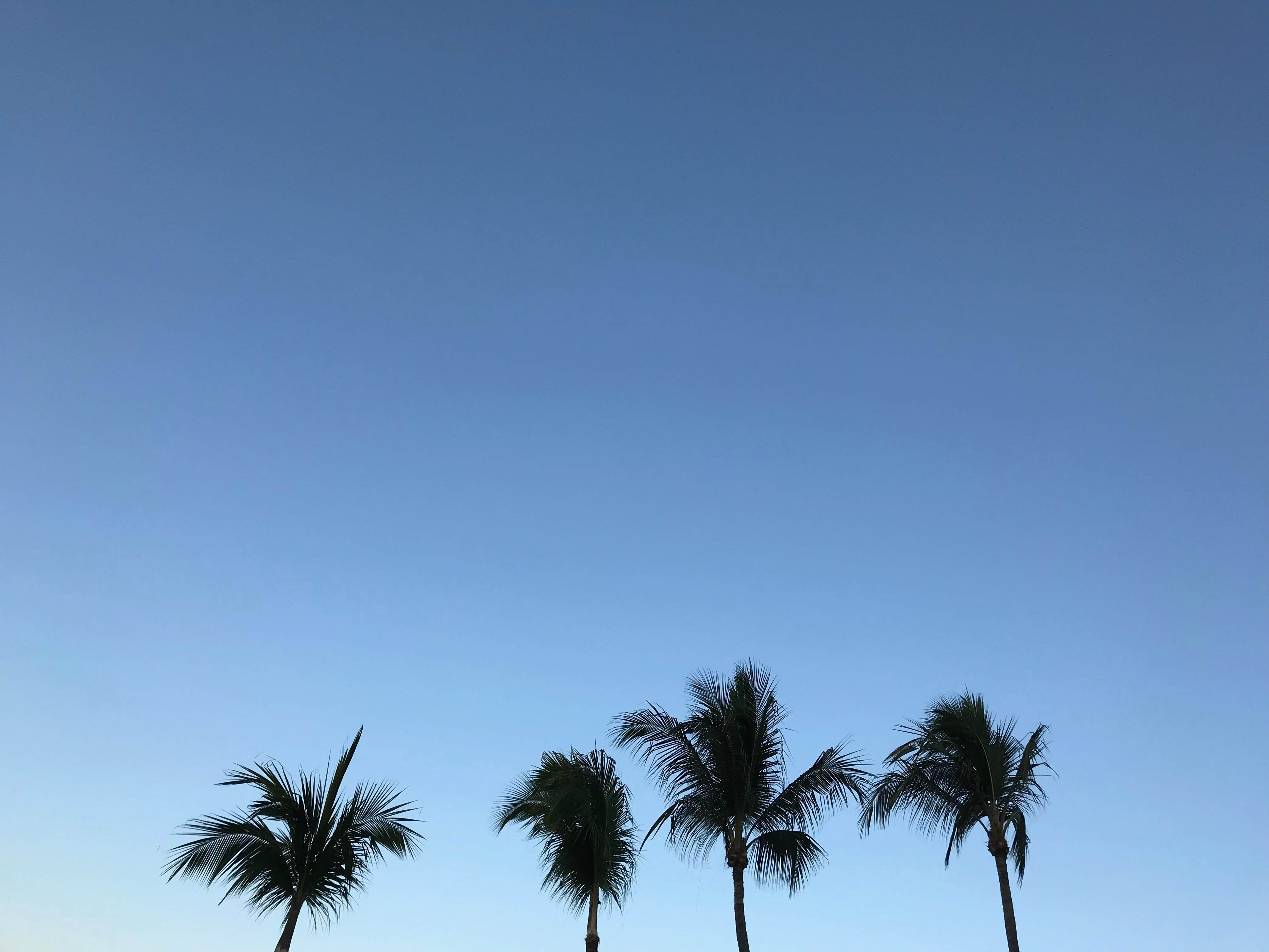 photo of four palm trees