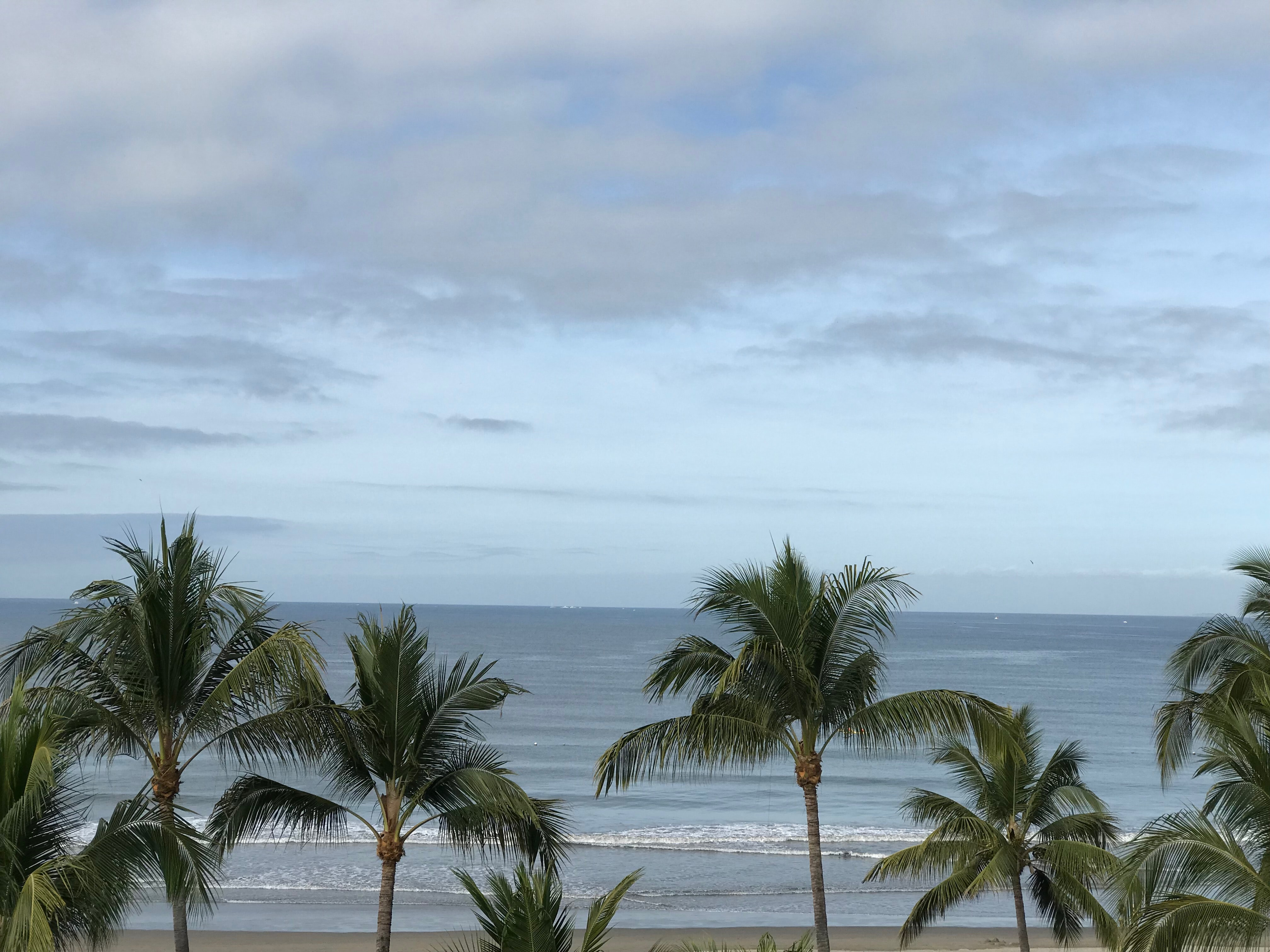 green coconut trees on seashore under white clouds and blue sky